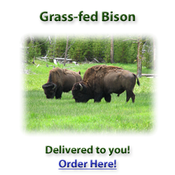 Grassfed Traditions bison